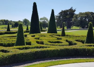 Adare Manor - Yew clipped in shape